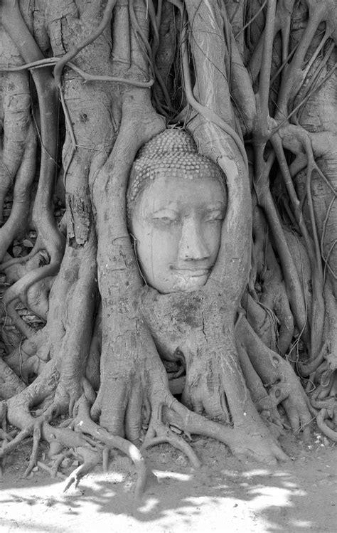images gratuites arbre noir  blanc plante tronc