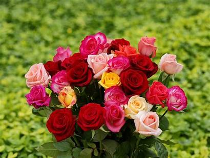 Roses Rose Bouquet Bouquets Wallpapers Pink Colorful