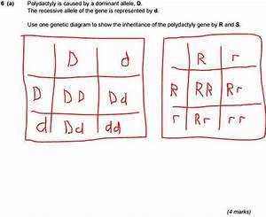 Biology Question Help  Genetic Diagram