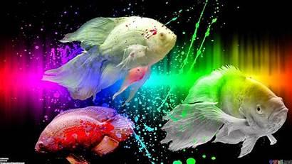 Fish Oscar Wallpapers
