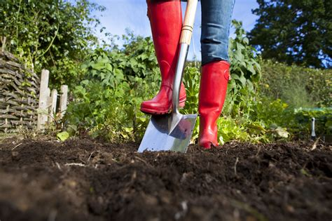 safety tips   manure   vegetable garden