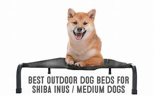 is coconut oil good for dogs my first shiba inu With best dog bedding for outside