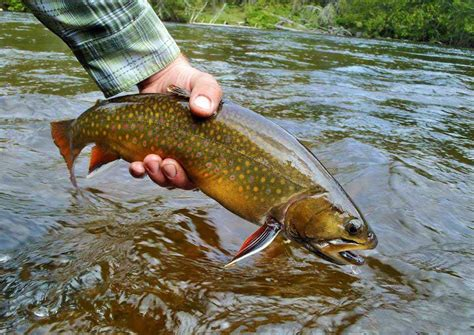 Brook Trout Fishing, Northern Ontario, Canada