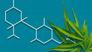 Cbd  Cannabidiol   All You Need To Know In One Guide