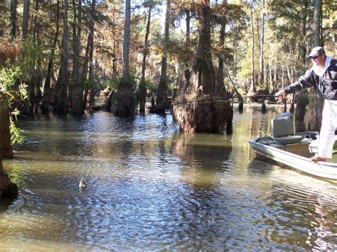 Lake Marion Sc Boat Rentals by Tips For Catching White Crappie On Santee Cooper S Lake Marion