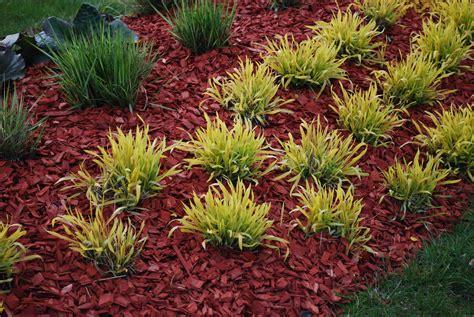 mulch for garden dyed mulch vs regular mulch using colored mulch in gardens