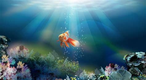 Animated Goldfish Wallpaper - goldfish desktop wallpapers this wallpaper