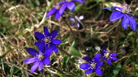 Pavasaris eina - YouTube