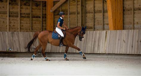 horse handed left right tell horsemanship