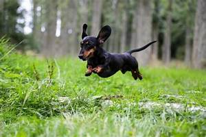 Top 6 Short Haired Small Dog Breeds