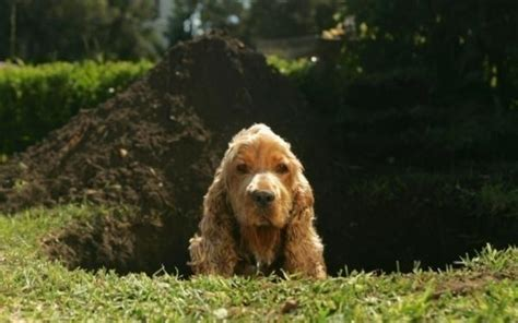 ¿cómo Evitar Que El Perro Haga Agujeros En El Jardín