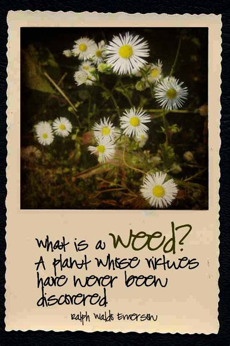 garden weed quotes quotesgram