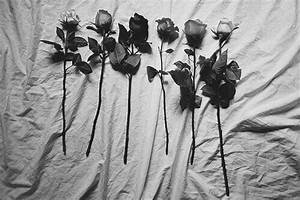 black and white, dark, flowers, grunge, indie, pale ...