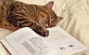 cat book photo of a cat with a book hd animals wallpapers