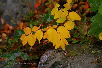 Leaves Change Autumn Orange Gold Spirit Llerrah