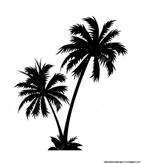 palm tree clipart black and white no background palm tree clip wallpapers background cliparting