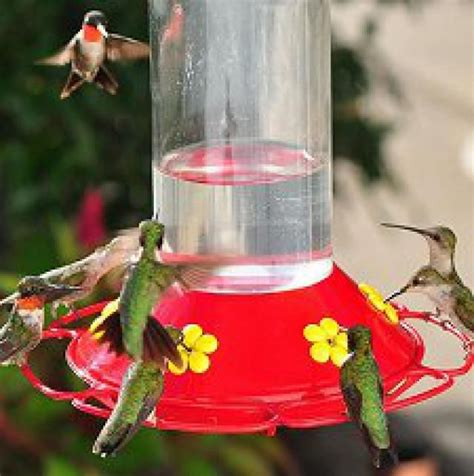 diy hummingbird food why you should always make your own hummingbird nectar hummingbird gardens and homemade