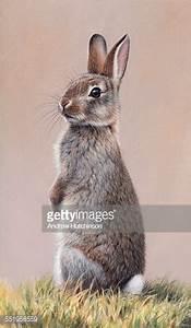Alert Rabbit Sitting Up On Hind Legs Stock Illustration ...