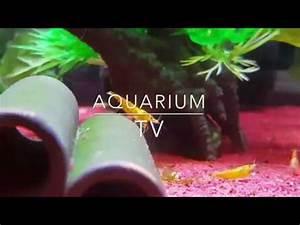Fische Für Anfänger : 10 einfach zu haltende fische f r anf nger youtube ~ Orissabook.com Haus und Dekorationen