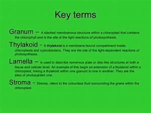 Chloroplasts Pigments