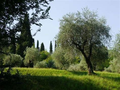 mediterrane pflanzen für den garten mediterrane pflanzen f 252 r den garten ein 220 berblick