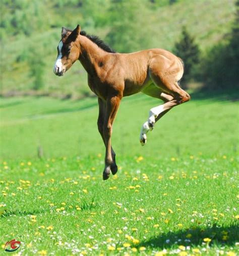 343 best images about The Heavenly Horse - Foals on ...