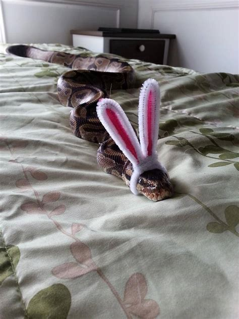 dont  scared    snakes wearing tiny hats