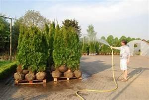 Cypres De Leyland Pas Cher : vente en ligne plantes haie conif res arbustes sapins ~ Dode.kayakingforconservation.com Idées de Décoration