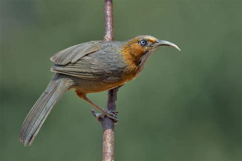 Uttarakhand Birds - Uttarakhandi