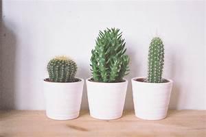 Aloe Vera Ikea : dorm tips tiny greenery ~ Preciouscoupons.com Idées de Décoration