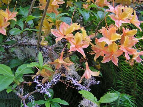 images  garden bushes  pinterest shade