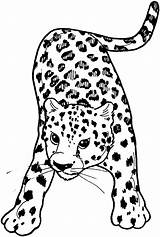 Leopard Coloring Pages Snow Amur Colouring Drawing Baby Leopards Animals Template Clouded Getdrawings Printable Cub Tree Supercoloring Popular sketch template