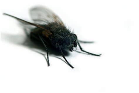 Fliegen Im Dachgeschoss  So Finden Sie Die Ursache