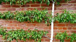 Apfelbaum Für Balkon : platzsparende obst spalierb ume pflanzen ~ Michelbontemps.com Haus und Dekorationen