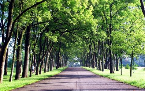 Background Images Of Trees by Trees Alley Road Grass Taiwan Wallpapers Trees Alley