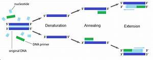 Polymerase Chain Reaction  The Past  Present And Future
