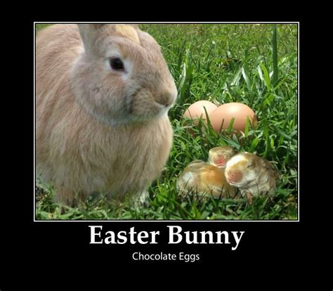 Easter Bunny Memes - origin of the easter bunny and laying chocolate eggs easter bunnies and peeps oh my