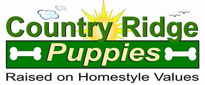 Standard Puppies Poodle Ridge Country