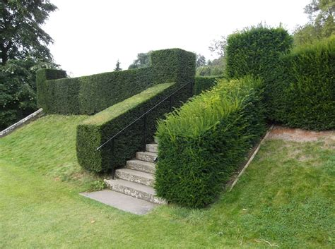 pruning yew trees 10 things to do in the january garden perfect plants