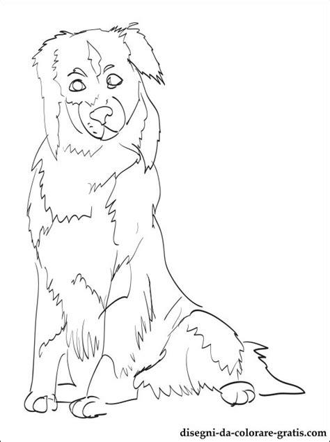 disegno  australian shepherd da stampare disegni da