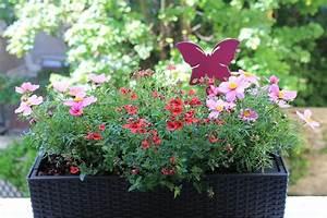 Plantes Et Fleurs Pour Balcon : bons plans et id es cadeaux pour la f te de m res ~ Premium-room.com Idées de Décoration