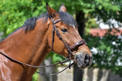 horse lifespan average pet canna checked fact january