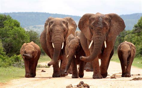 Animals Mammals Elephant Wallpapers Hd Desktop And