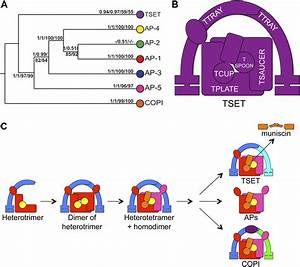 Characterization Of Tset  An Ancient And Widespread Membrane Trafficking Complex