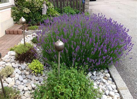 Lavendel Und Gräser by Lavendel Oregano Salbei Thymian Bohnenkraut Mit Silbernen