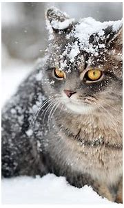 Cat Wallpaper Snow Face #10573 Wallpaper | WallDiskPaper