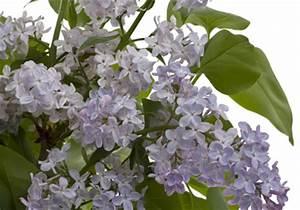 Pflanzen Im Mai : welche blumen im mai blumen in nanopics blumen im mai pflanzen jeder zweite schenkt zum ~ Buech-reservation.com Haus und Dekorationen