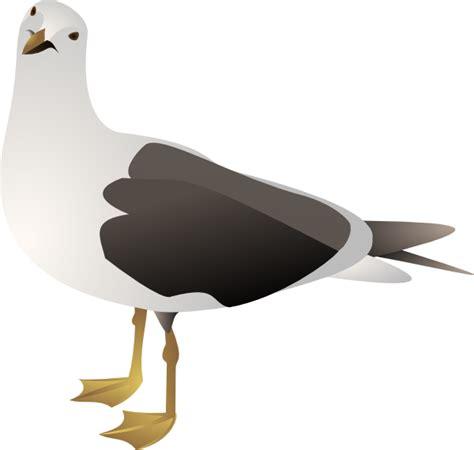 Seagull Clipart Gull Clip At Clker Vector Clip
