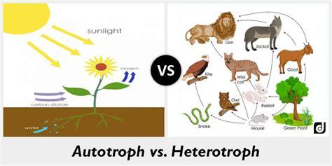 difference between autotroph and heterotroph