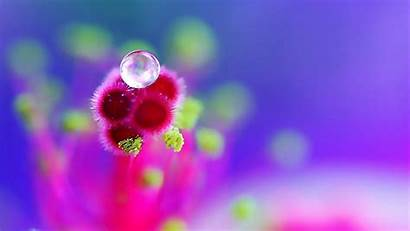Drops Dew Flower Wallpapers Droplets Flowers Quotes